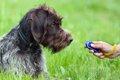 犬のしつけに「音」…の画像