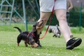 犬の散歩のしつけで…の画像