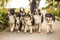 犬の多頭飼いにおけ…の画像