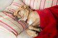 犬の急性胃炎~原因…の画像