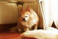 犬にも白髪が生える…の画像
