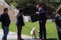 「1100万円で愛犬を…の画像