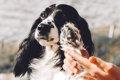 犬の肉球によく起こ…の画像