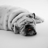 犬のダイエット方法…の画像