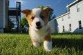 子犬の低血糖に気を…の画像