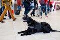 空港で働いている犬…の画像