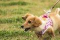 飼い犬の問題行動っ…の画像