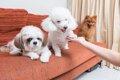 犬の毛玉ができる原…の画像