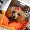 愛犬に安心して留守…の画像
