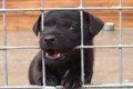 愛犬のためにケージ…の画像