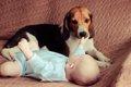 犬と赤ちゃんが一緒…の画像
