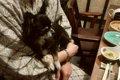 愛犬と行く客室露天…の画像