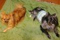 犬の多頭飼いのメリ…の画像