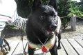 愛犬の存在が飼い主…の画像