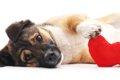 犬の肝臓がんは早期…の画像