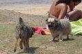 海外の犬のウンチ対…の画像