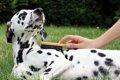 犬がうっとりする3…の画像