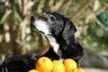 サプリメントは犬の…の画像