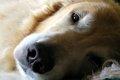 犬の乳腺腫瘍とは?…の画像