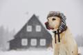 寒い季節の生活習慣…の画像