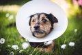 犬の蛋白喪失性腸炎…の画像