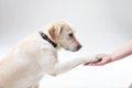あなたの愛犬も天才…の画像