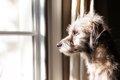 犬にインセクトシー…の画像