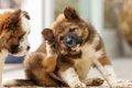 犬が痒がる原因 症…の画像