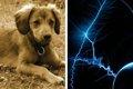 犬の無駄吠え防止首…の画像