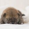 子犬を迎える準備!…の画像