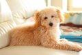 人気犬種のトップに…の画像