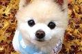 アイドル犬〜俊介く…の画像