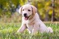 犬がアレルギーを引…の画像