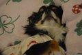 愛犬が寝ない!症状…の画像