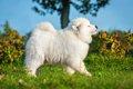 夏バテしやすい犬種…の画像