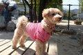 愛犬の衣類やタオル…の画像