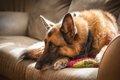 犬が腹痛の時に見せ…の画像