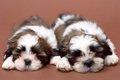 犬の治療費が高額化…の画像