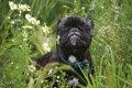 犬は「匂い」からど…の画像