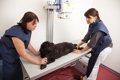 犬の「バリウム検査…の画像