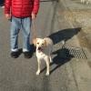 犬が散歩で引っ張る…の画像