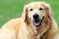 大型犬に多い「肘タ…の画像