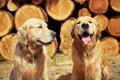 愛犬の永遠の命?韓国…の画像