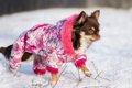 犬の寒さの感じ方と…の画像
