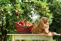 犬にドライフルーツ…の画像