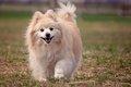 犬のスマイルはすべ…の画像