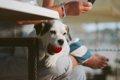 愛犬が異物を咥えて…の画像