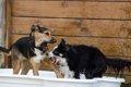 犬の犬嫌いを克服す…の画像