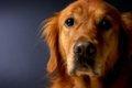 犬に嫌われたときに…の画像