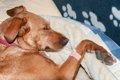 犬が自分の傷口を舐…の画像